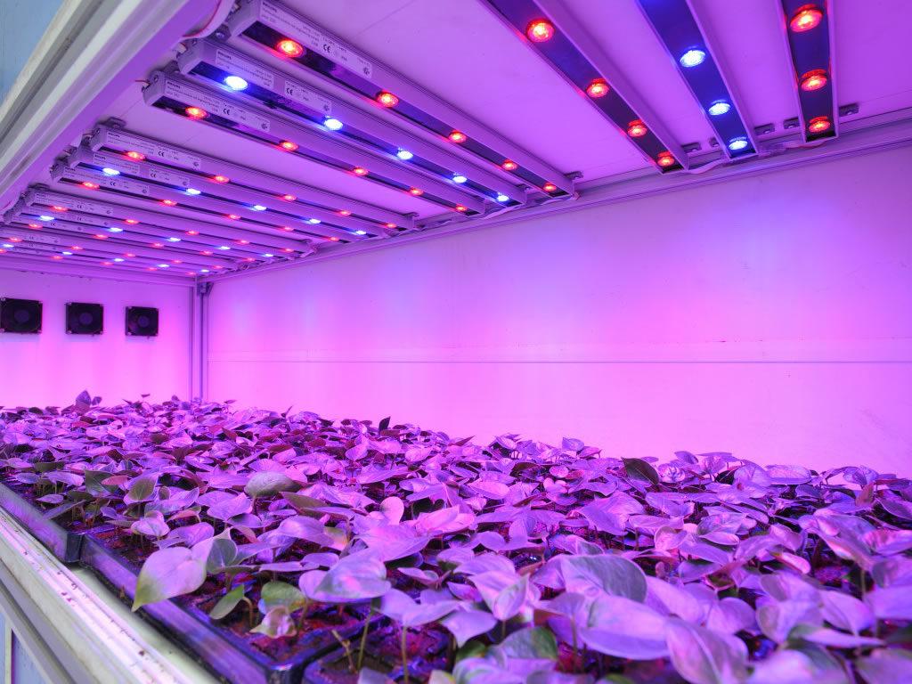 Лучшие варианты освещения для растений